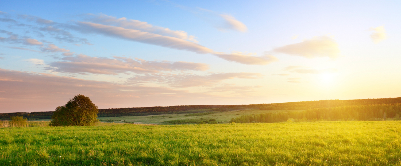 spring-farm-field